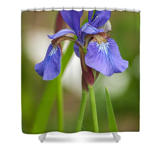 Purple Bearded Iris Shower Curtain
