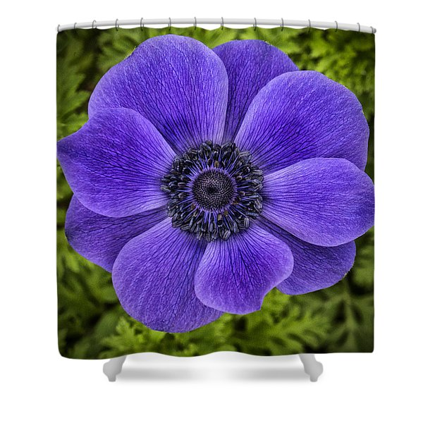 Purple Blue Anemone Shower Curtain