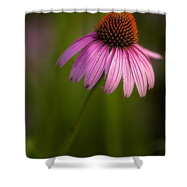 Purple Cone Flower Portrait Shower Curtain