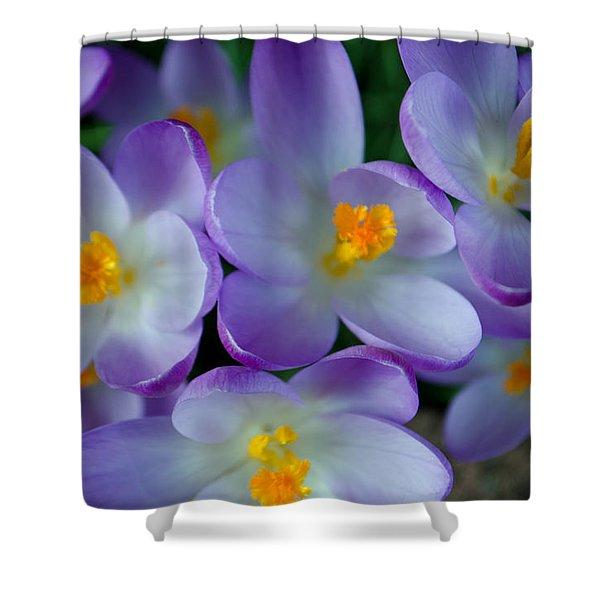Purple Crocus Gems Shower Curtain