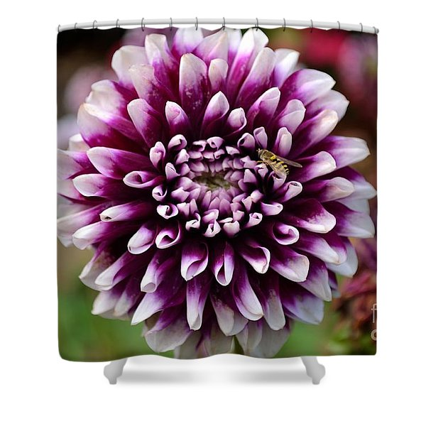 Shower Curtain featuring the photograph Purple Dahlia White Tips by Scott Lyons