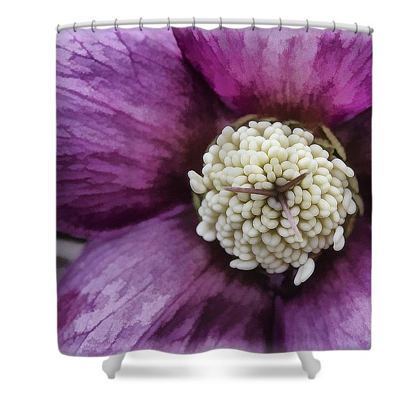 Purple Hellebore Shower Curtain