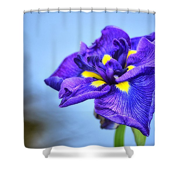 Purple Pond Iris Shower Curtain