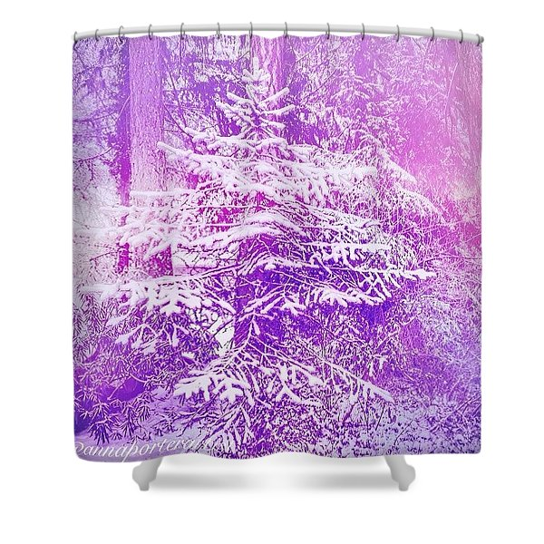 Purple Spruce In The Snow Shower Curtain