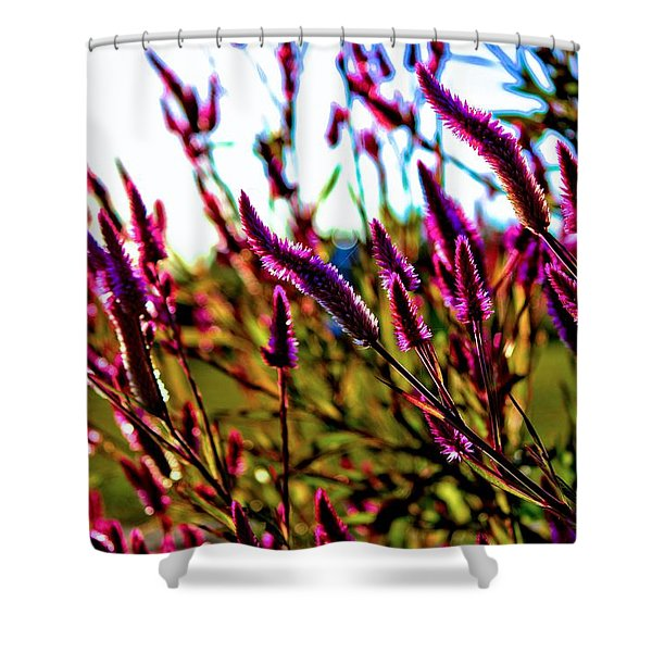 Purpleness Shower Curtain