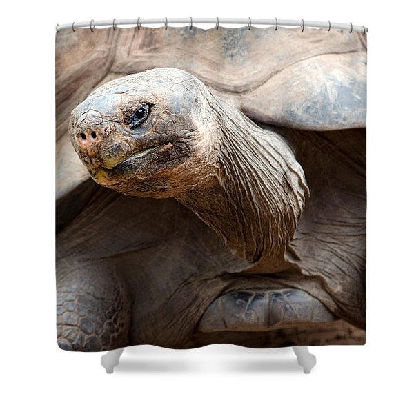 Puzzled Shower Curtain