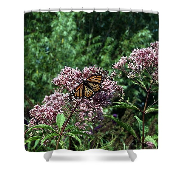 Shower Curtain featuring the photograph Pye Fly by Leeon Photo