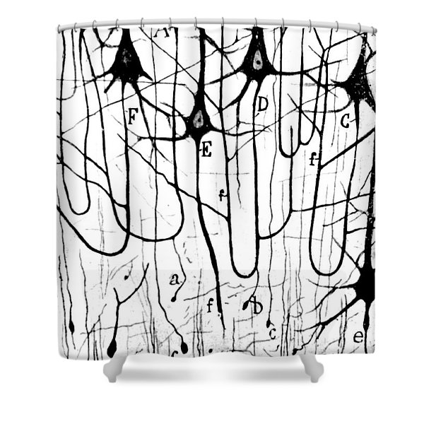 Pyramidal Cells Illustrated By Cajal Shower Curtain