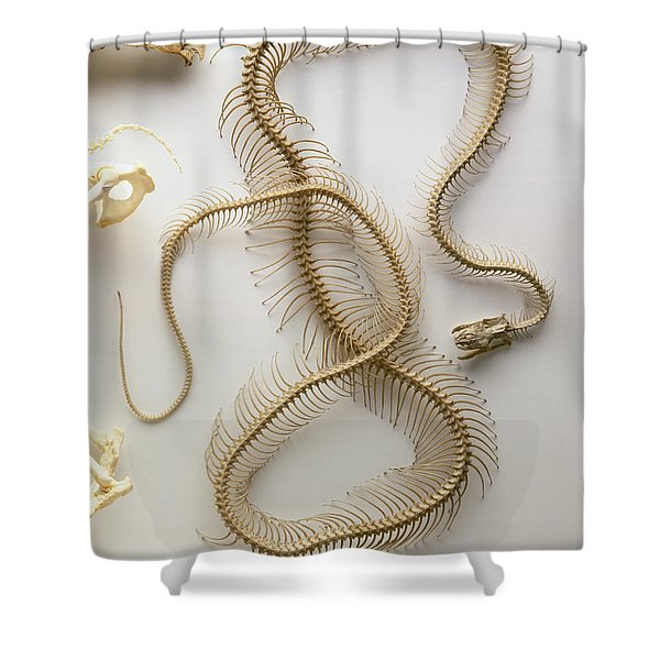 Python Skeleton Shower Curtain