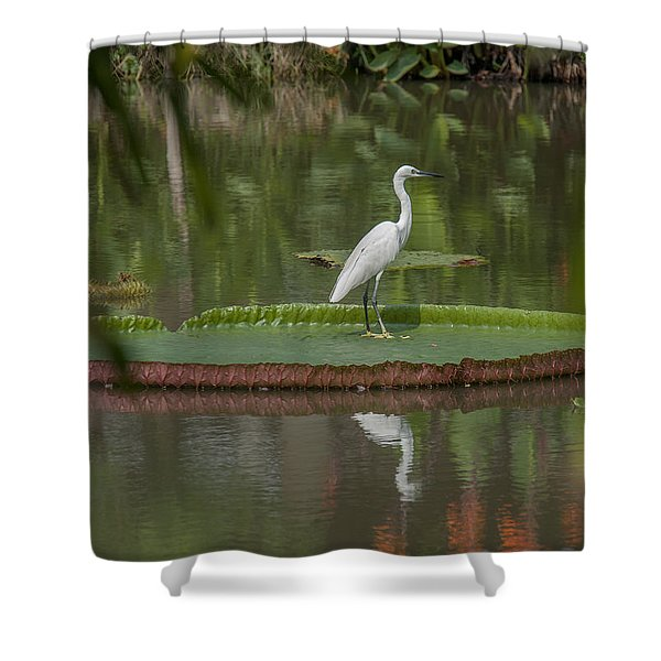 Queen Victoria Water Lily Pad With Little Egret Dthb1618 Shower Curtain
