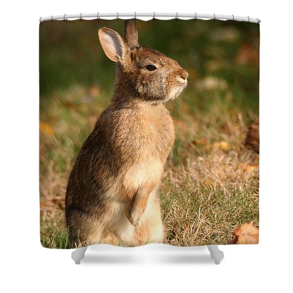 Shower Curtain featuring the photograph Rabbit Standing In The Sun by William Selander