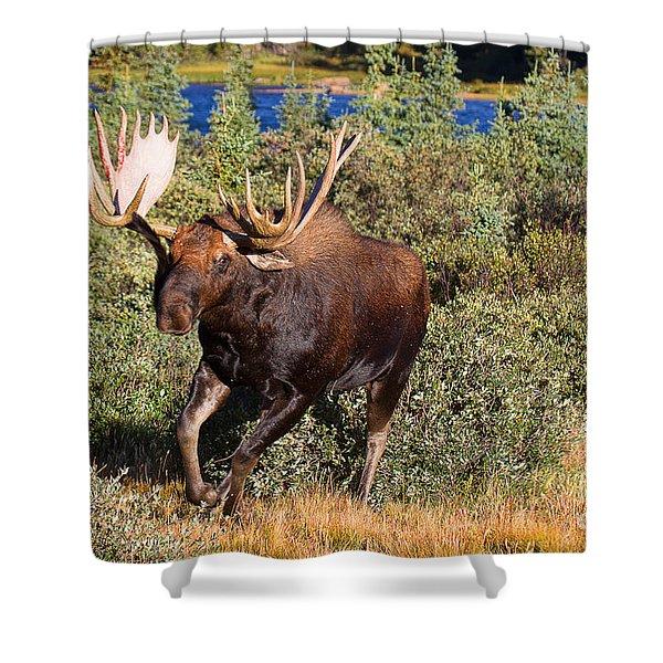 Charging Bull Shower Curtain