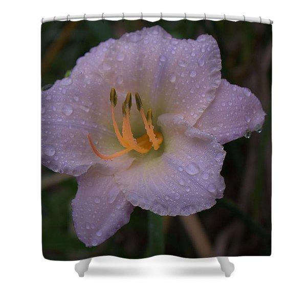 Rain Daylilly 2 Shower Curtain