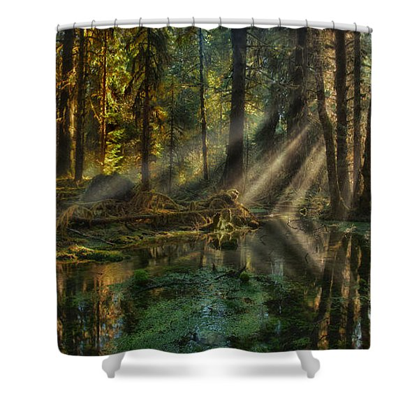 Shower Curtain featuring the photograph Rain Forest Sunbeams by Mary Jo Allen