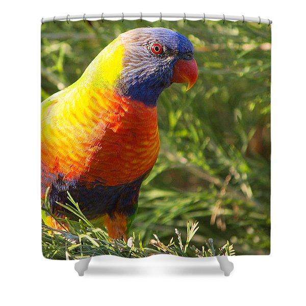 Rainbow Lorikeet Shower Curtain