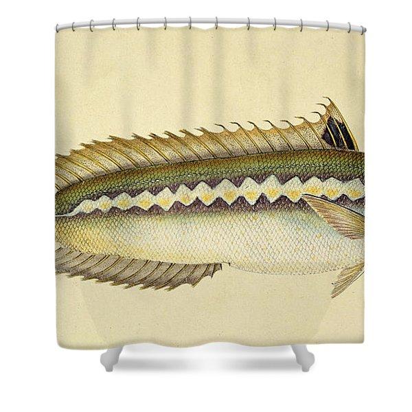 Rainbow Wrasse Shower Curtain