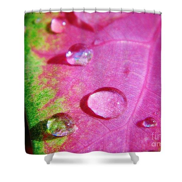 Raindrop On The Leaf Shower Curtain