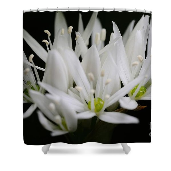 Ransome Photo 2 Shower Curtain