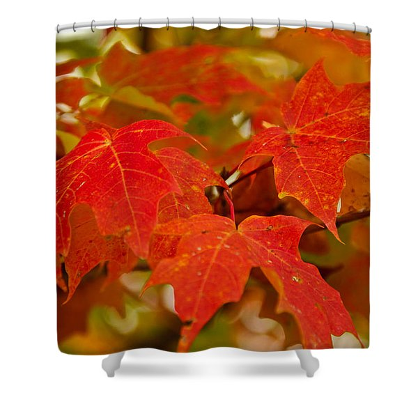 Ravishing Fall Shower Curtain