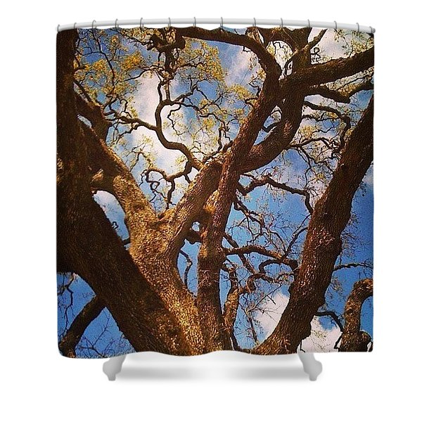 Picnic Under The Giant Oak Tree Shower Curtain