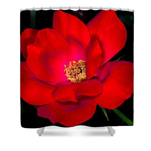 Real Red Shower Curtain