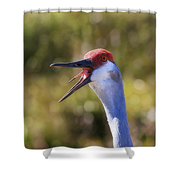 Really ?  Shower Curtain