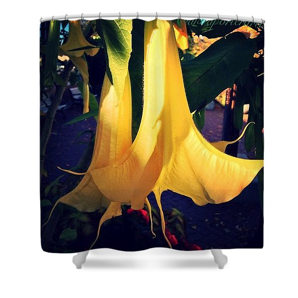 Really Loving These Trumpet Flowers Shower Curtain