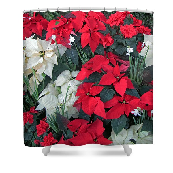 Red And White Poinsettias Shower Curtain