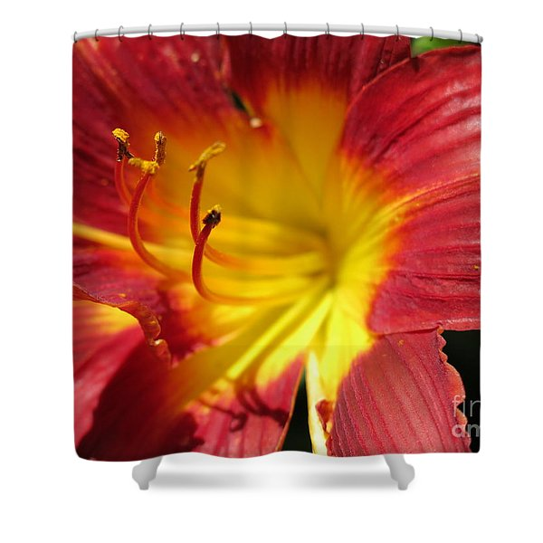 Red And Yellow Day Lily Shower Curtain