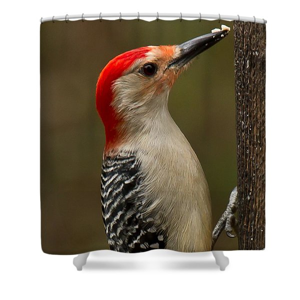 Shower Curtain featuring the photograph Red-bellied Woodpecker by Robert L Jackson