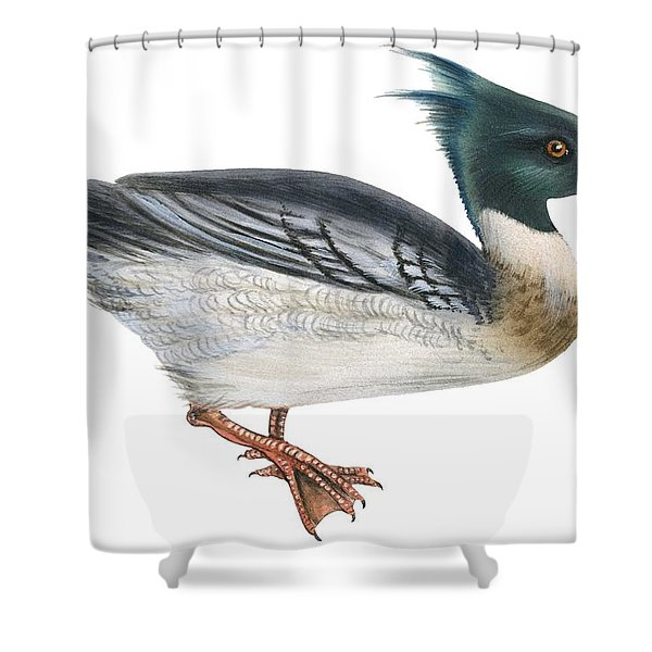 Red-breasted Merganser Shower Curtain
