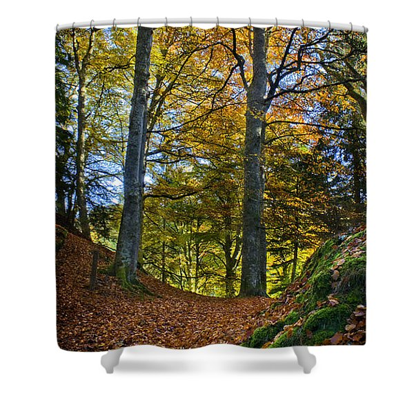 Red Carpet In Reelig Glen During Autumn Shower Curtain