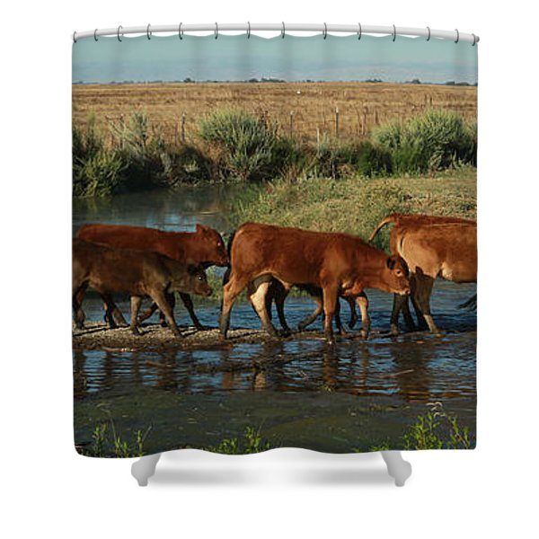 Red Cattle Shower Curtain
