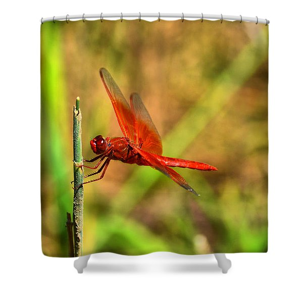 Red Dragon Dreams Shower Curtain