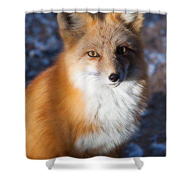 Shower Curtain featuring the photograph Red Fox Standing by John Wadleigh