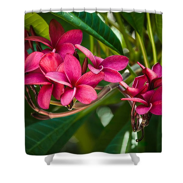 Red Frangipani Flowers Shower Curtain