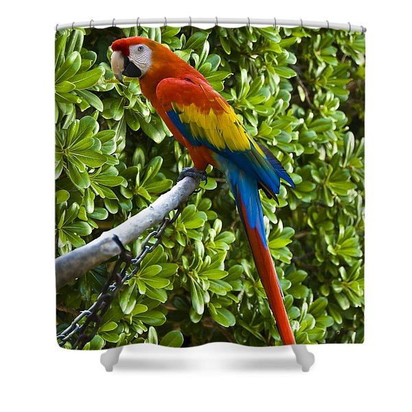 Red-green Macaw Shower Curtain
