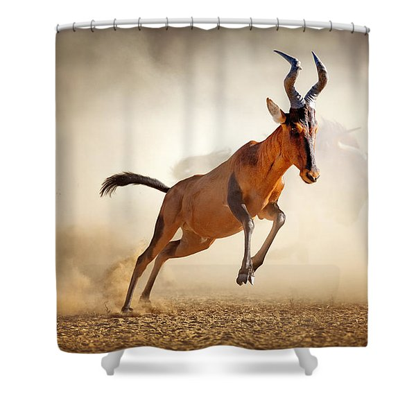 Red Hartebeest Running In Dust Shower Curtain