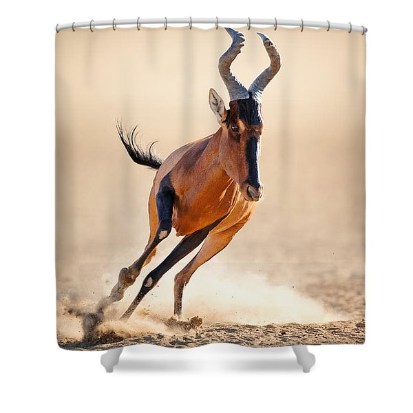 Red Hartebeest Running Shower Curtain