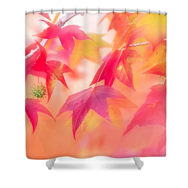 Red Leaves With Backlit, Autumn Shower Curtain