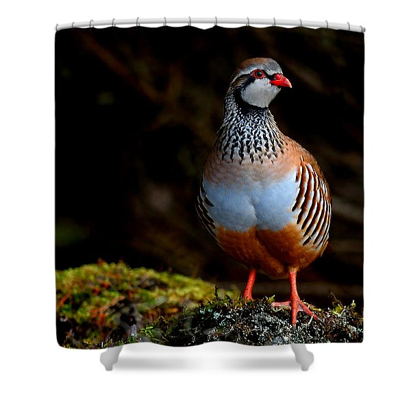 Red-legged Partridge Shower Curtain