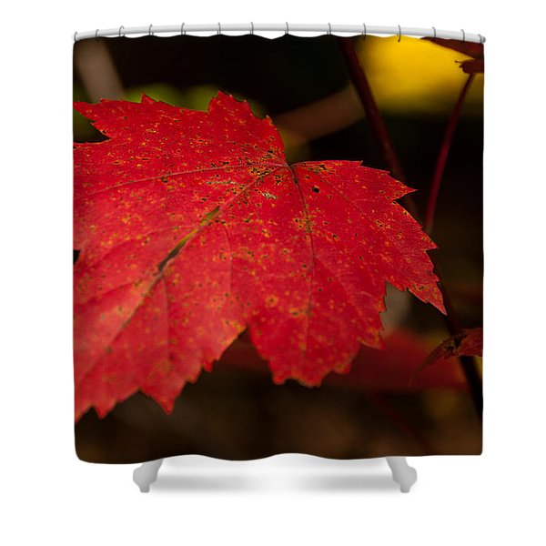 Red Maple Leaf In Fall Shower Curtain