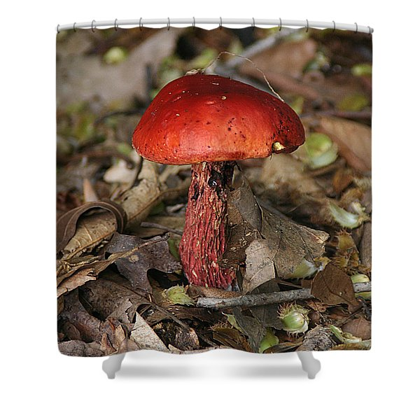 Red Mushroom Shower Curtain