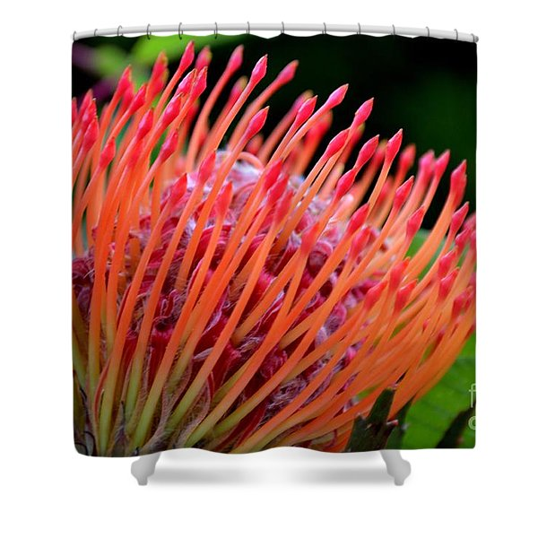 Shower Curtain featuring the photograph Red Pin Cushion by Scott Lyons