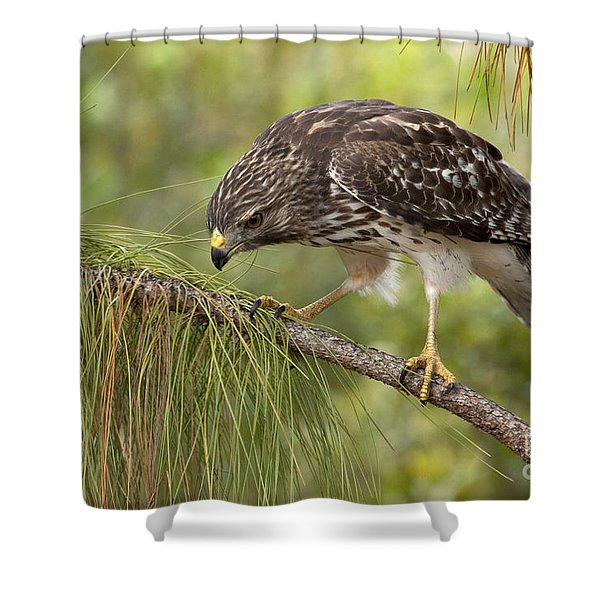 Red Shouldered Hawk Photo Shower Curtain
