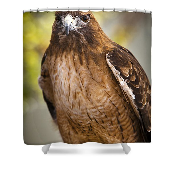 Shower Curtain featuring the photograph Eyes Of The Raptor by David Millenheft