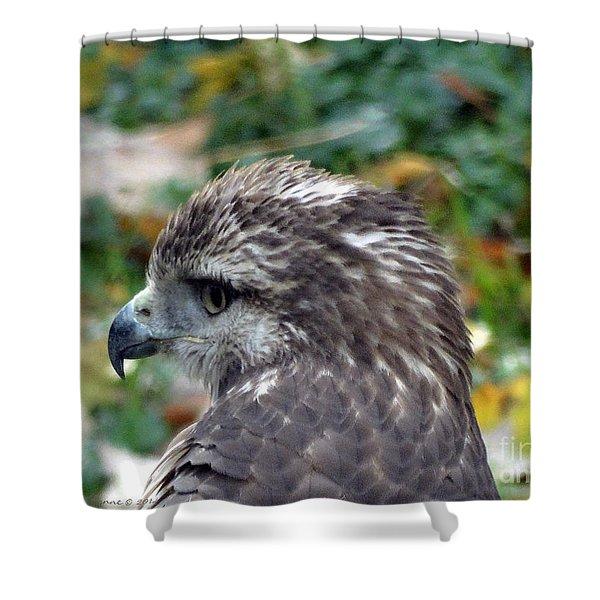 Red Tail Hawk Head Shot Shower Curtain