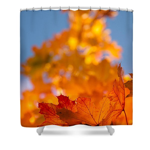 Red Tipped Gold Shower Curtain