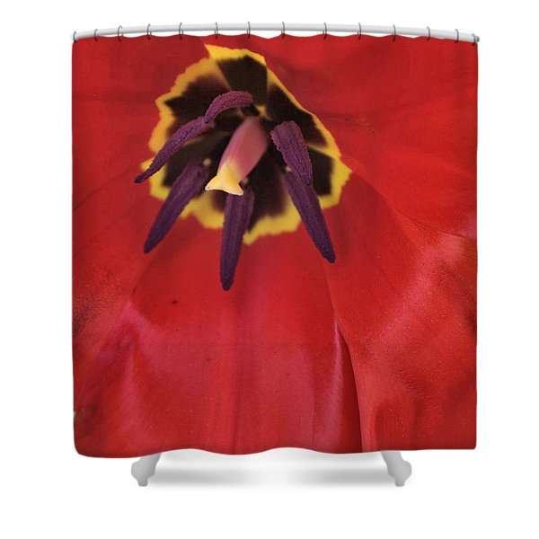 Red Tulip Detail Shower Curtain