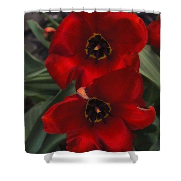 Red Tulip Pair Shower Curtain